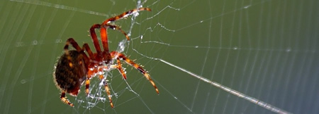 SEO Websites Spider